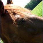 avatar de Jedaho